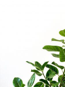 plant ontspanning